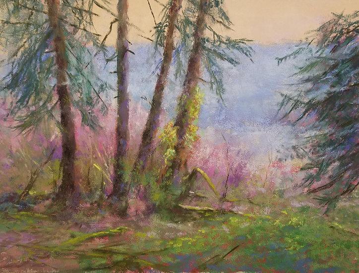 pastel bob palmerton beneath the pines at lake quinault