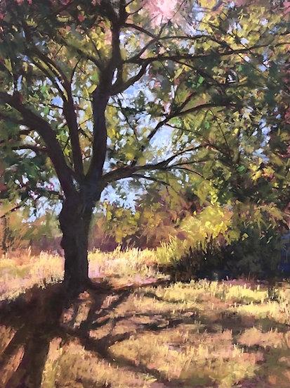 pastel kim eshelman in the shade