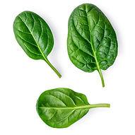 Spinach leaves fresh leafy greens InvertiGro fresh produce