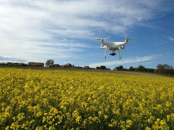 Mon drone surveillant le colza