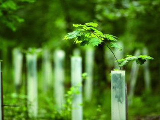 Carbon Offsetting with moretrees.eco