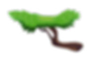 USE--BRANCHES1.png