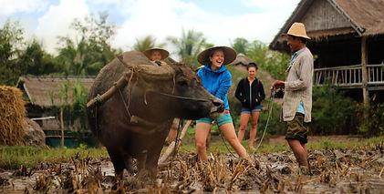 buffalo tilling.jpg