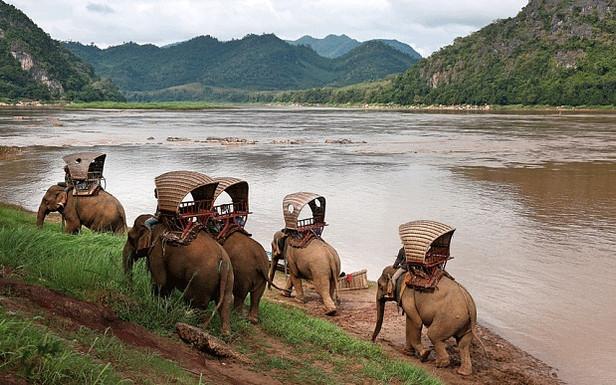 elephants in laos.jpg