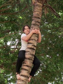 SL-coconut tree2