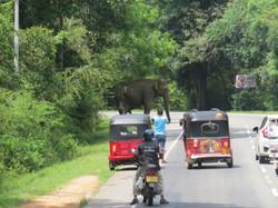 SL-elephant crossing