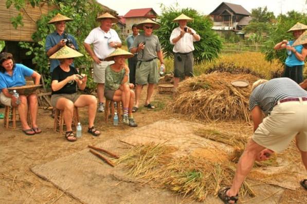 threshing rice.jpg