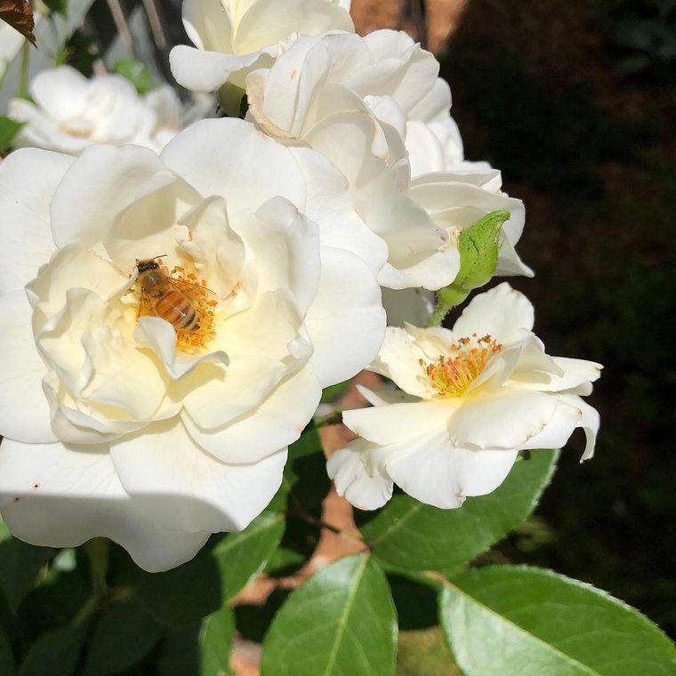 BlossomBee.jpeg