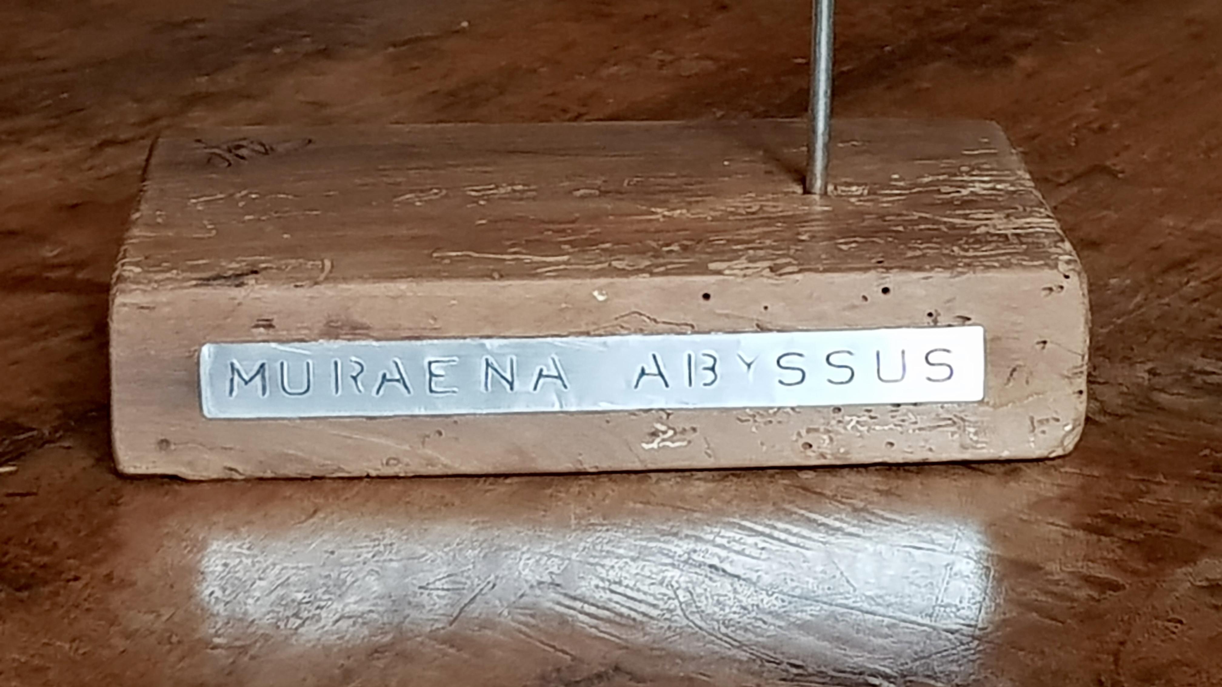 Muraena Abyssus