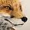 Thumbnail: The Gazing Fox