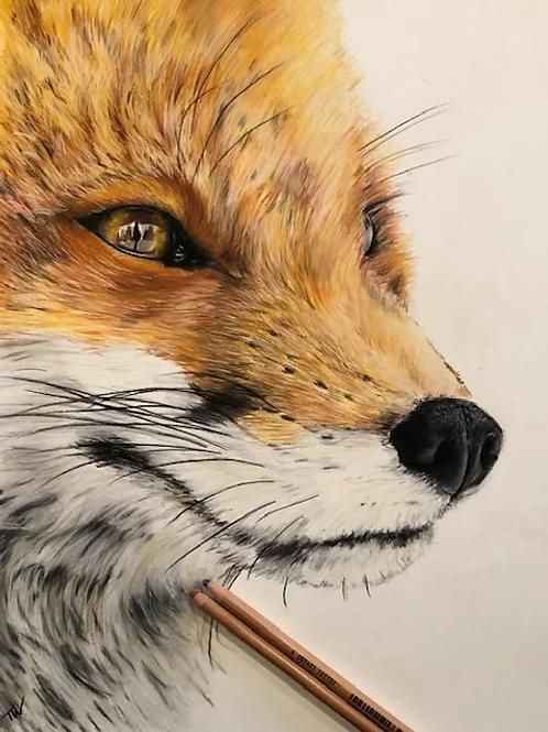 The Gazing Fox