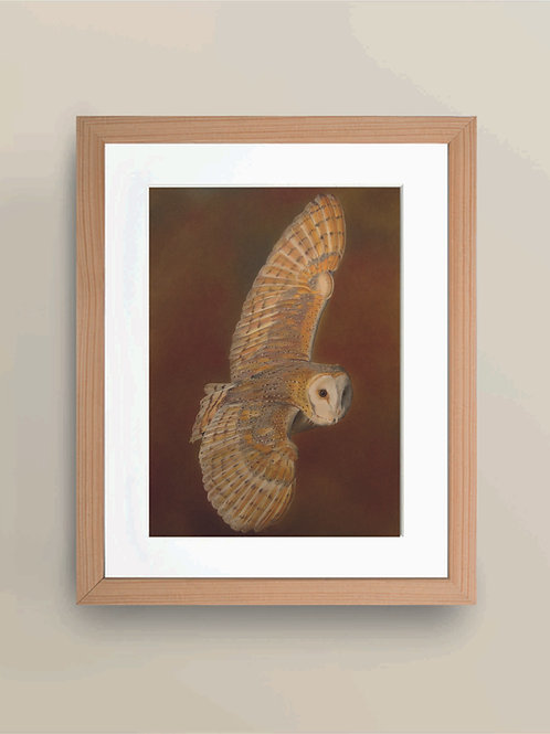 A4 'Beauty in Flight' Limited Edition Giclée Print