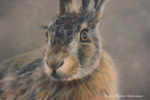 November Hare