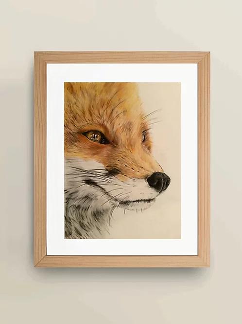 A4 'The Gazing Fox' Giclée Print