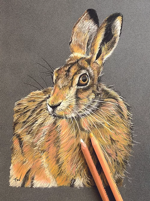 The Wise Hare