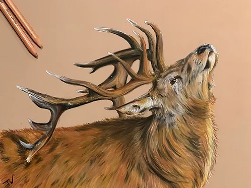 The Summer Stag