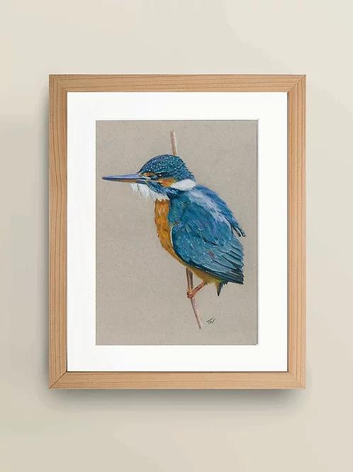 A4 'Kingfisher' Giclée Print
