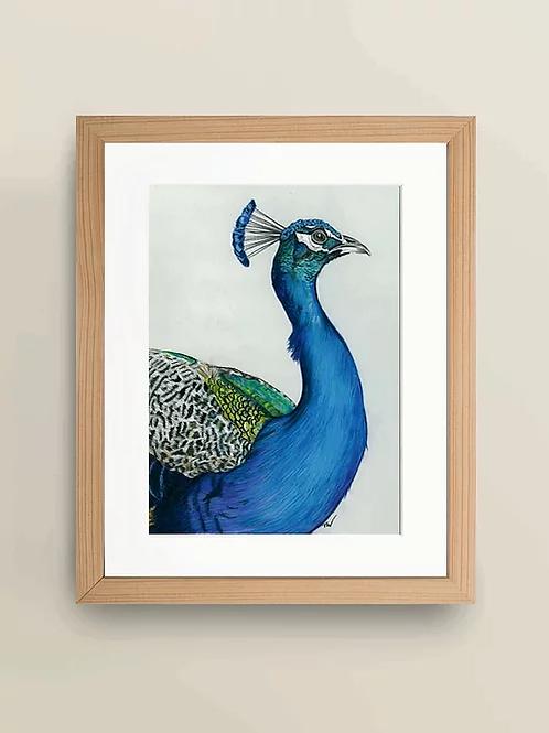 A4 'Peacock' Giclée Print