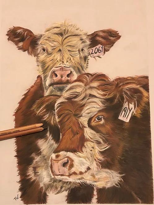 Inquisitive Cattle