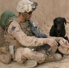 Dogs for Veterans