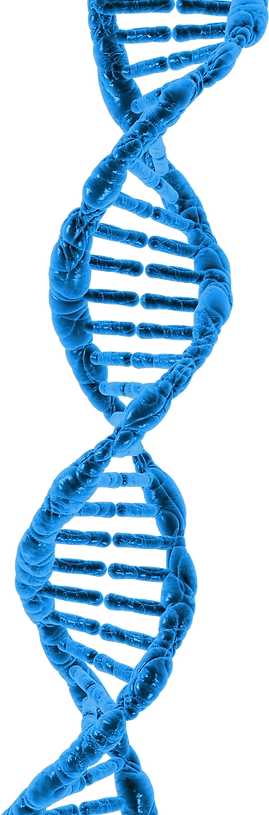 dna-163710_1280.png