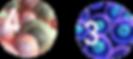 Capture d'écran 2019-02-27 à 01.36.13.pn