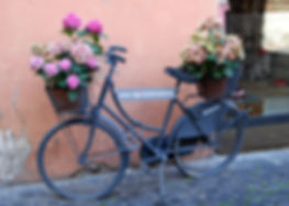 28a Bicycle and Flowers.jpg