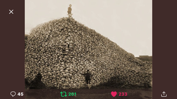 European destruction of Buffalo