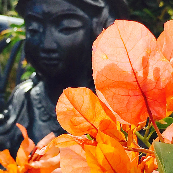 Orange Bougainvilla by Sonia Keshishian Photography