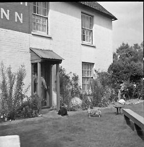 bush 1950's.jpg