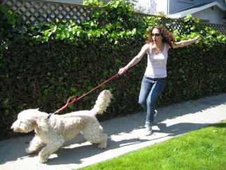 Image result for dog at end of leash