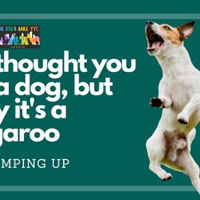 Is your dog making Tigger look calm?