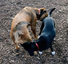 Image result for dogs greeting each other
