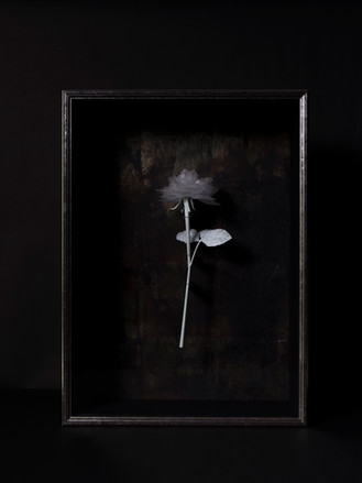 一朶の花 #1 / 薔薇