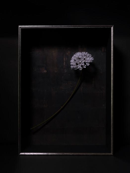 一朶の花 #3 / アリウム