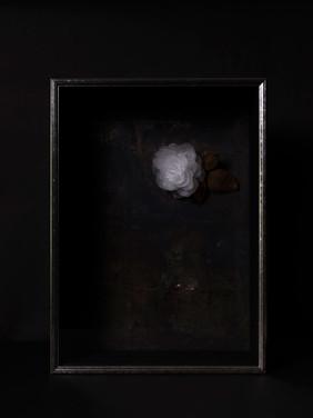 一朶の花 #4 / 薔薇