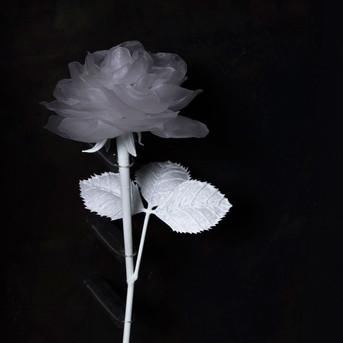 一朶の花 #1 / 薔薇 -detail-