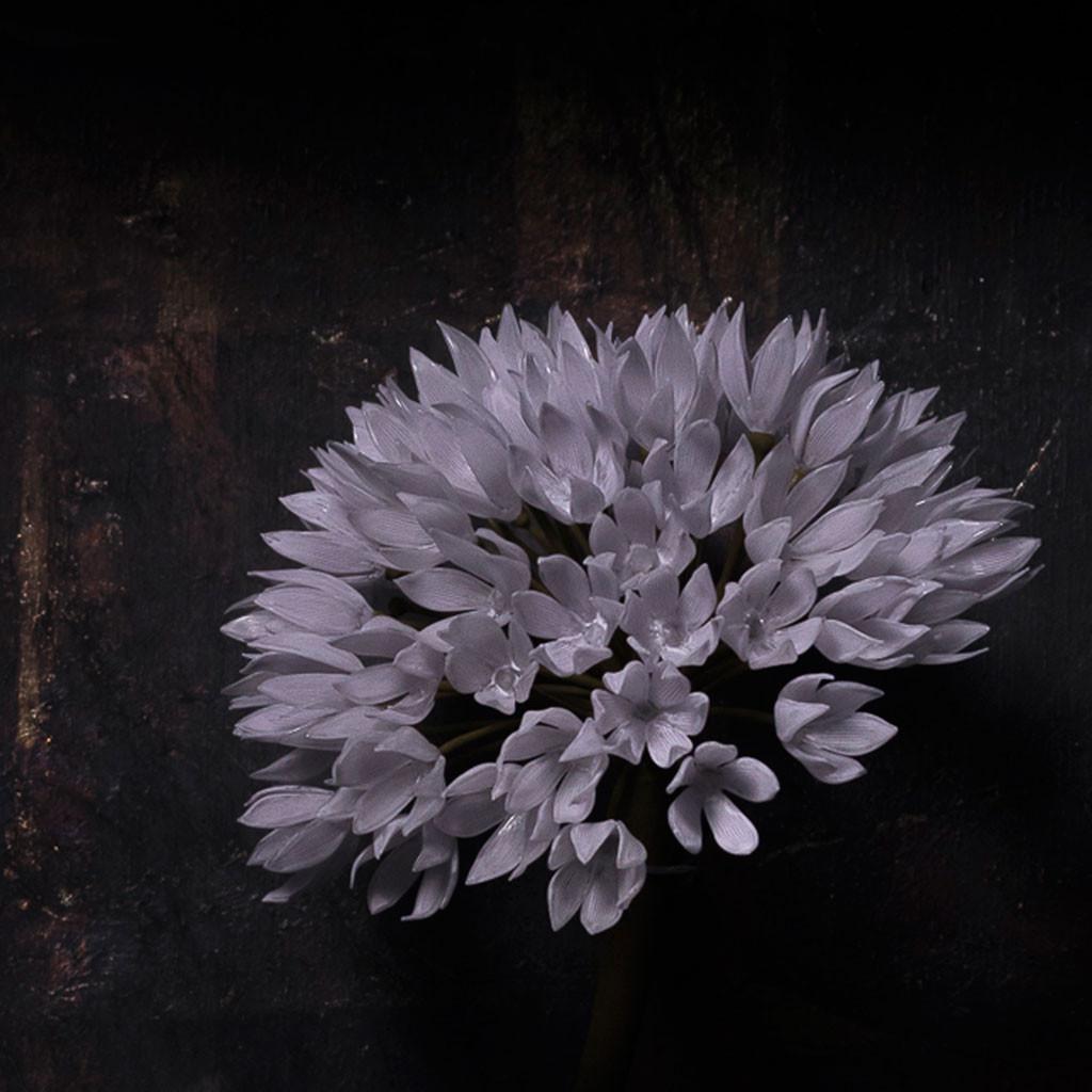 一朶の花 #3 / アリウム  -detail-