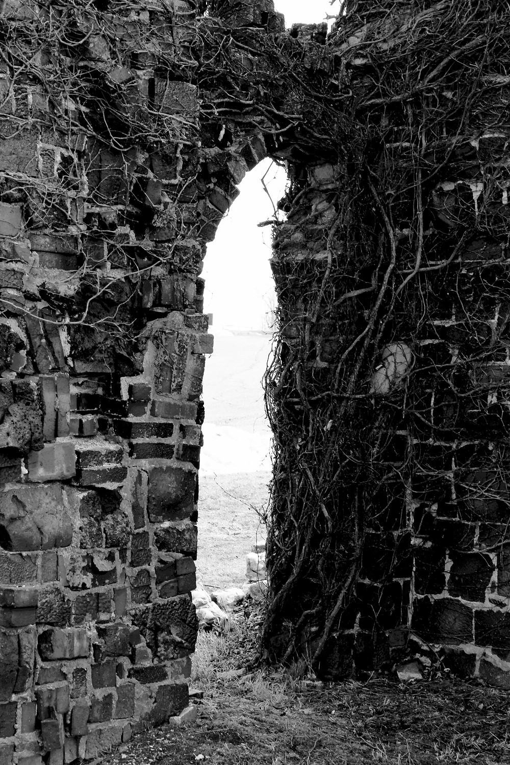 Brick archway covered in vines and branches in black and white