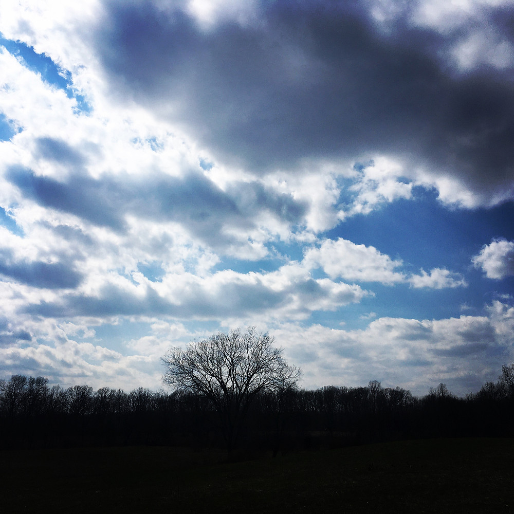 Blue sky covered with white and gray clouds over a single large tree