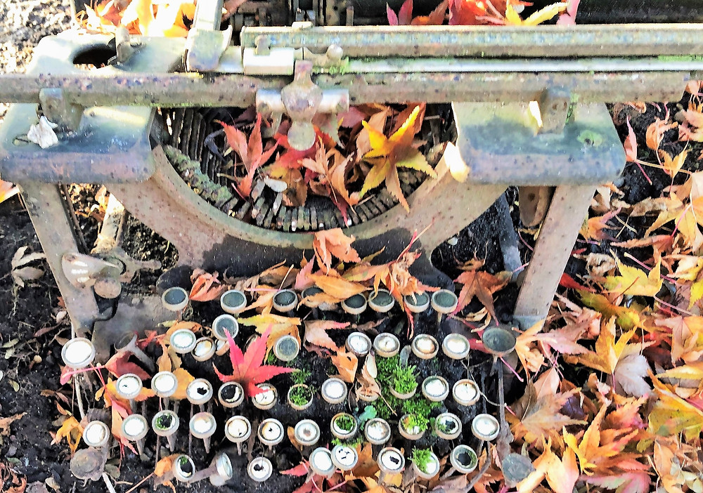 Photo of vintage typewriter covered in autumn leaves taken on the grounds of a winery in Woodinville, WA.