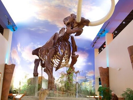 Visit Local Exhibits From Your Home