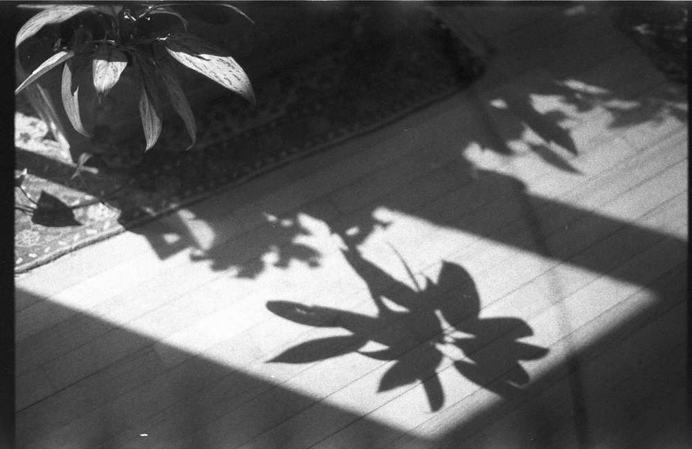 Black and white photo of a plant in a window, sunlight streaming and casting a shadow of the plant on the wooden floor