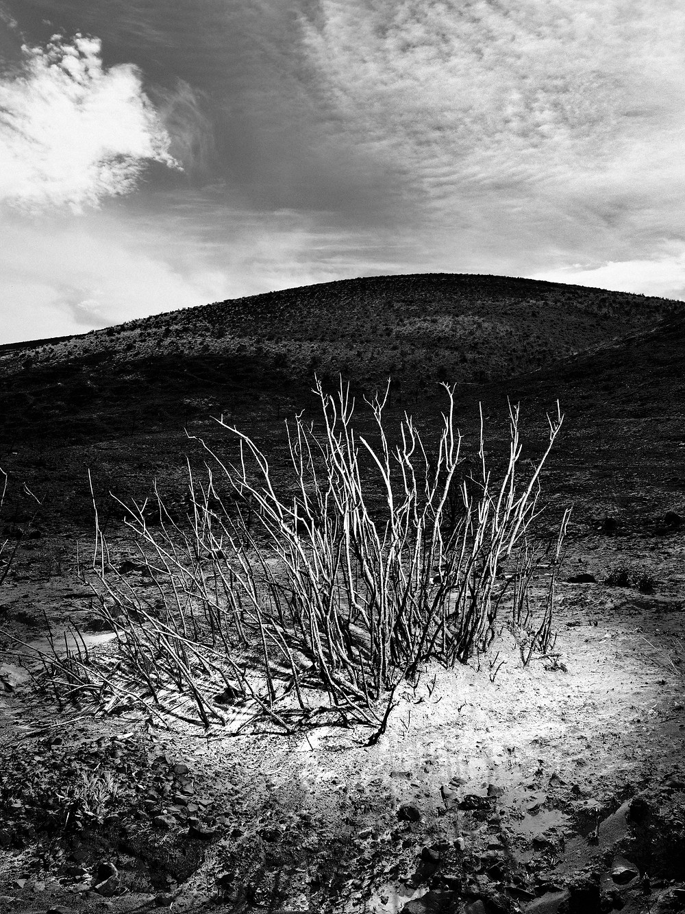 black and white photo of desert plan and hill in background