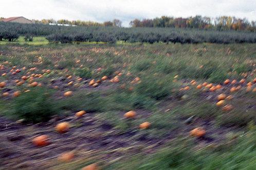 Rolling Pumpkins