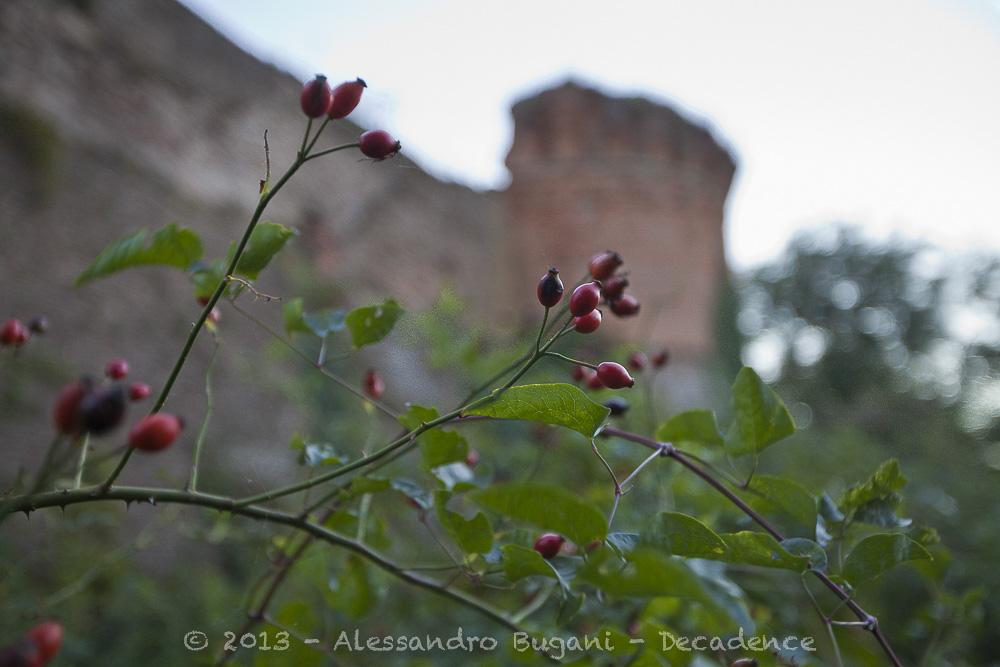 Castello di monte poggiolo-86