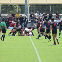 Rugby Club-Red Stallions-
