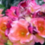 Thumb The Roses in their Season.jpg