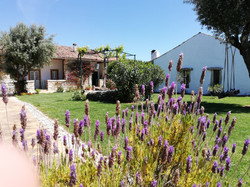 Flores Jardim