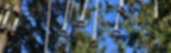 tree-3285345__480.jpg